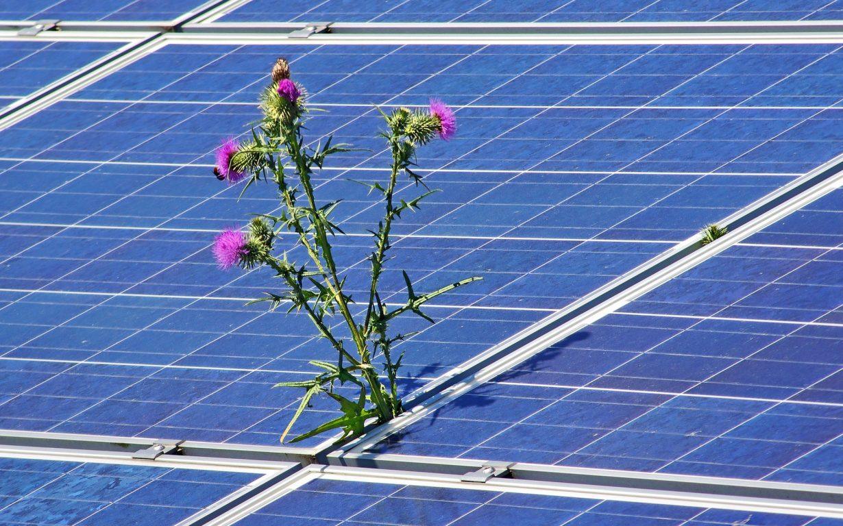 panneau solaire salissure et perte de rendements
