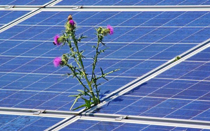 panneaux solaires mal entretenus